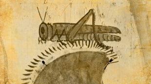 india locust attacks
