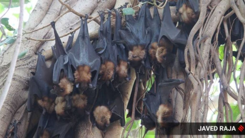 Day after Kerala Nipah death, 11 person have symptoms