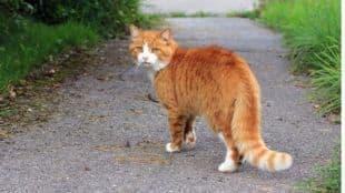 Corona Outbreak, China, Cat Covid