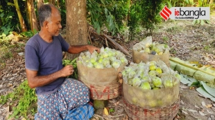Guava is pride of Baruipur, more than ten thousand family is financially depends on Guava farming